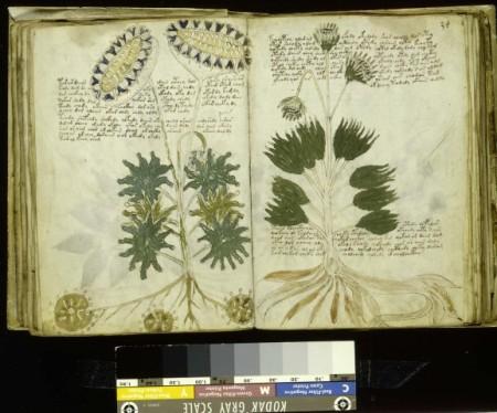 Voynich Manuskript Beispiel