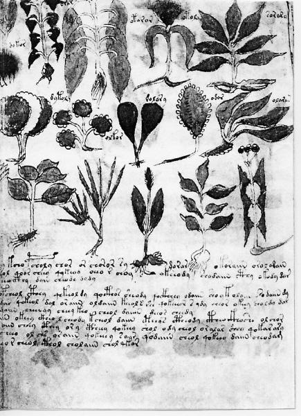 Voynich Manuskript Seite